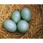 Dietologės patarimai. Kiek valgyti kiaušinių ir kaip nepersivalgyti per Velykas