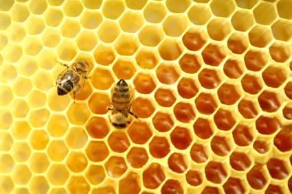 Bičių produktai – gamtos turtai žmogui