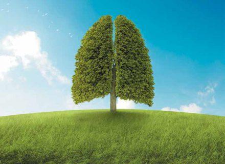Lėtinės obstrukcinės plaučių ligos: pradžia gal naujagimystėje?