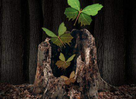 Augalų svarbiausia neperlaistyti