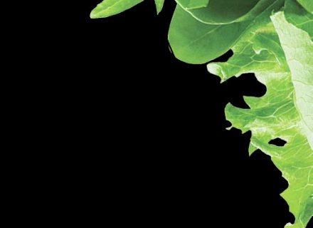 Salotos – vitaminų užtaisas