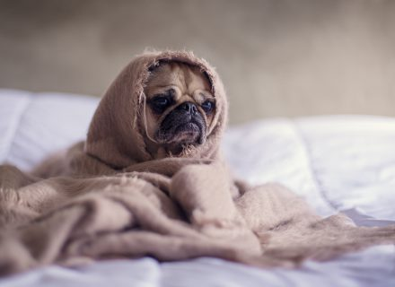 Kad į Jūsų duris nepasibelstų gripas