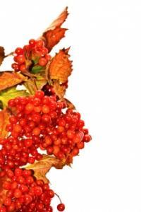 Rudeninės gamtos dovanos sveikatai
