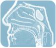 LOR (nosies, gerklės, ausų ligos)