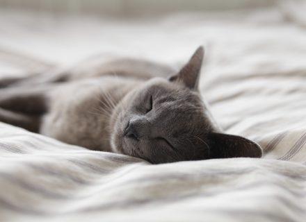 Miego trūkumas pavojingesnis nei manyta