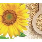 Kodėl verta sėklas įtraukti į valgiaraštį?