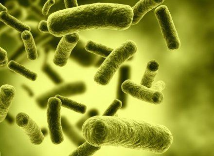 Ką mokslas jau žino apie gerąsias bakterijas ir jų naudą?